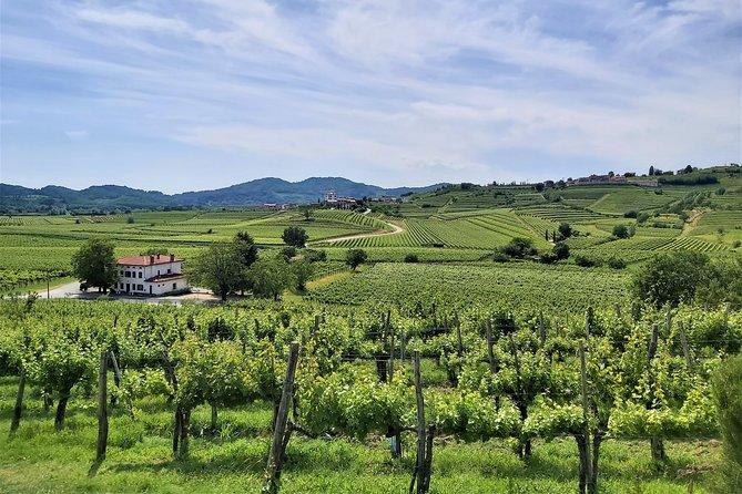 E-bike experience between vineyards of Goriška Brda - transfer from Ljubljana