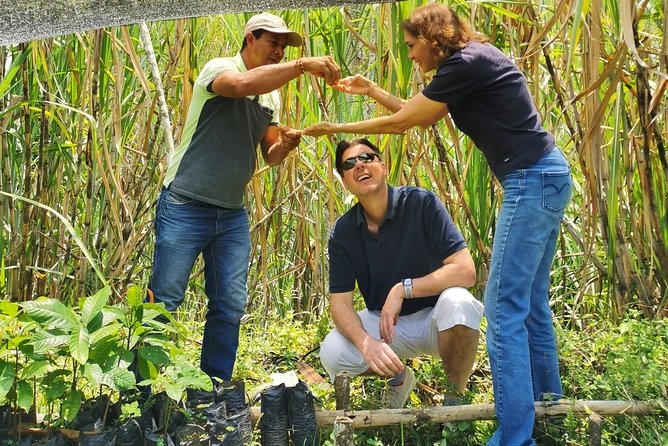 Chocolate Private Tour In Medellin: A Great Farm Experience