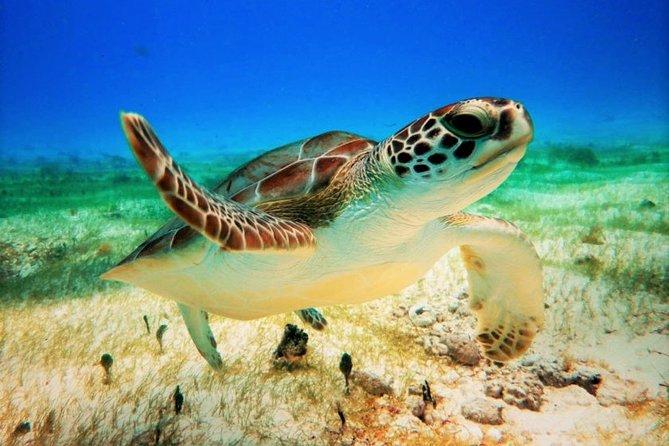 Tulum + Gran cenote + turtles