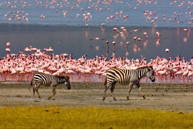 One Day Safari to Lake Manyara National Park