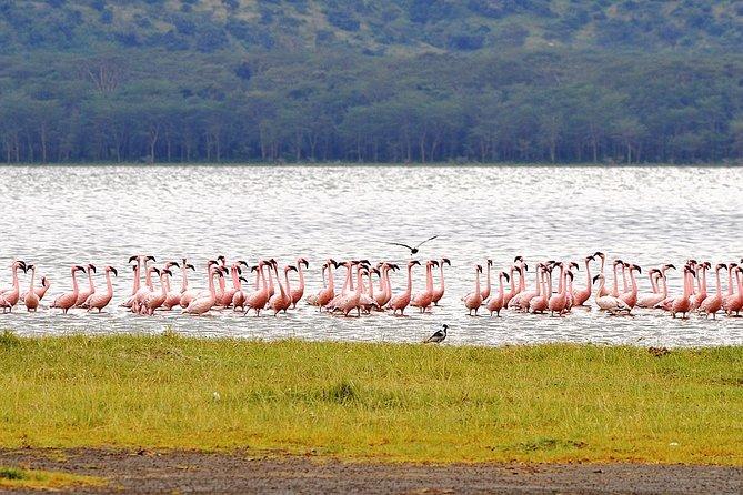 Romantic tour in Nakuru