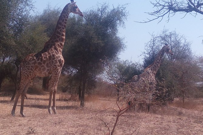 Visit Bandia Reserve