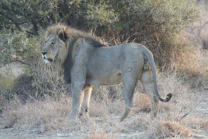 Tanzania Safari Best Tours in Tanzania