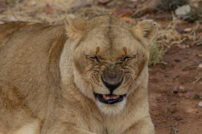 best budget safari in Tanzania serengeti safari