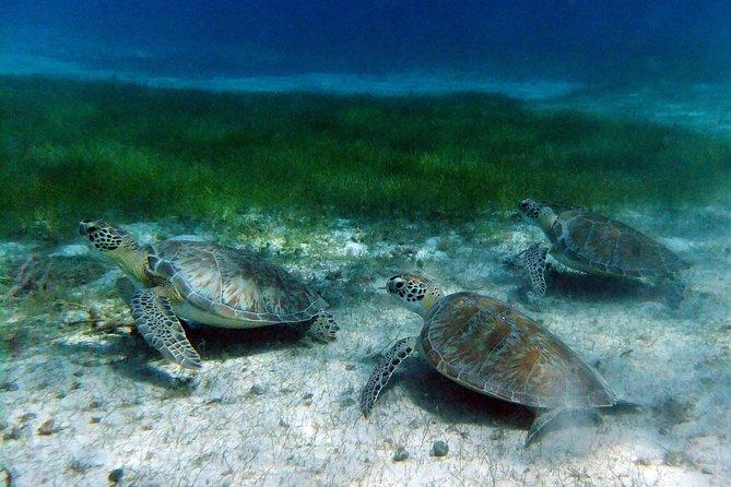 Turtle Cove Snorkel & Beach Excursion