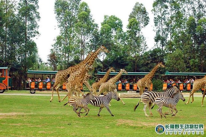 Guangzhou Private Day Tour to Chimelong Safari Park
