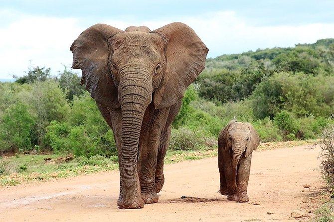 Shore Excursion Cruise Ships Port Elizabeth, Addo Elephant Park