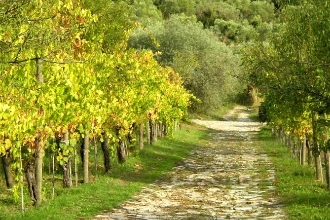 Cilento in the vineyard