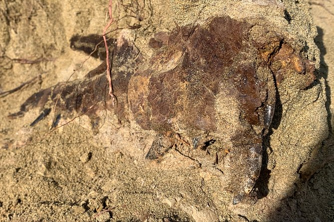 Guided Dinosaur Fossil Digging in Powderville