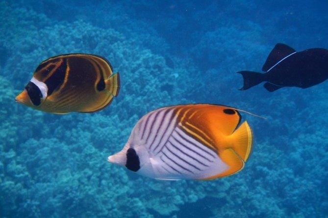 Night Manta Ray Swim