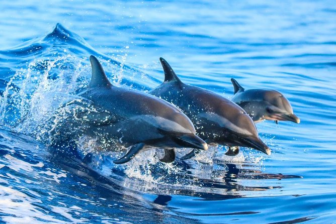 Dolphin Watching Activity with Snorkeling in Hurghada