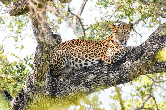 Wilpattu National Park Private Safari with Naturalist photo 1