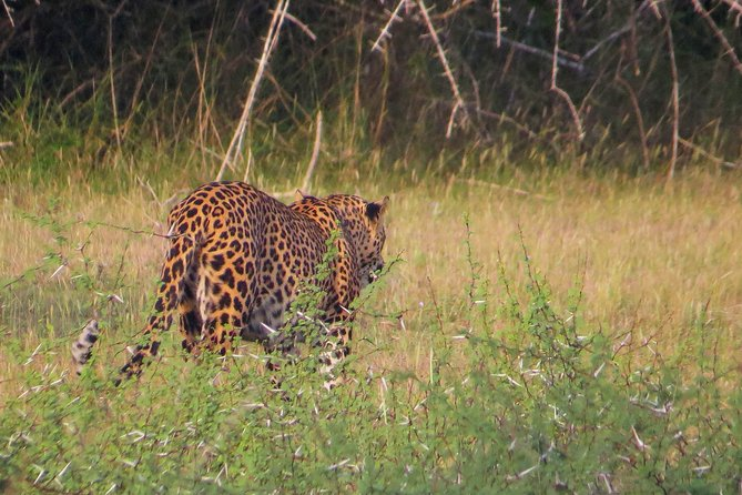Wilpattu National Park Private Safari with Naturalist photo 7