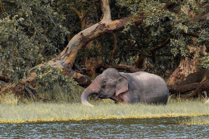 Wilpattu National Park Private Safari with Naturalist photo 8