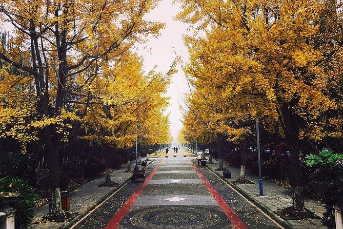 Romantic Tour in Chengdu