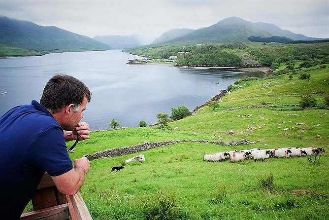 Visit traditional working sheep farm & sheepdog demo. Galway. Guided. 1 ½ hours.