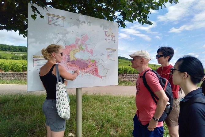 Aloxe-Corton, its great vintages - Wine tour