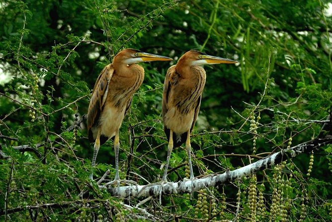 Private Sightseeing Tour in Bird Sanctuary and Stepwell with Transportation