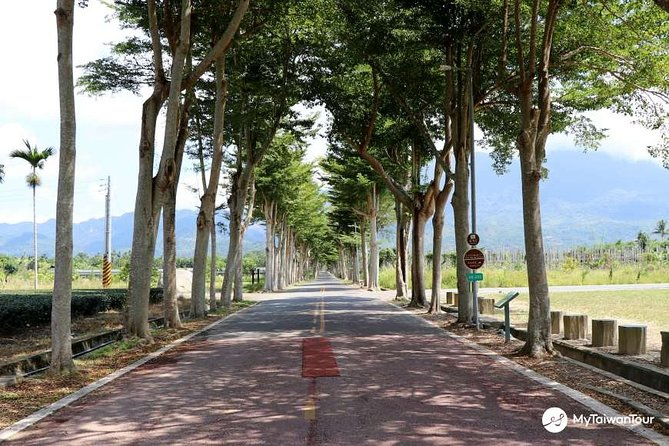 Day 3: Cycle or be driven on a guided tour through Longtien Village and surrounding tea farms.