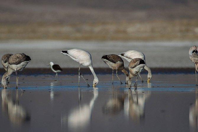 4-Days Experience at Uyuni Salt Flat From San Pedro de Atacama