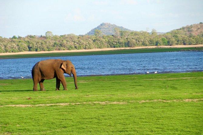 Gal Oya National Park Safari