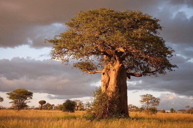Full-Day Safari to Tarangire National Park from Arusha
