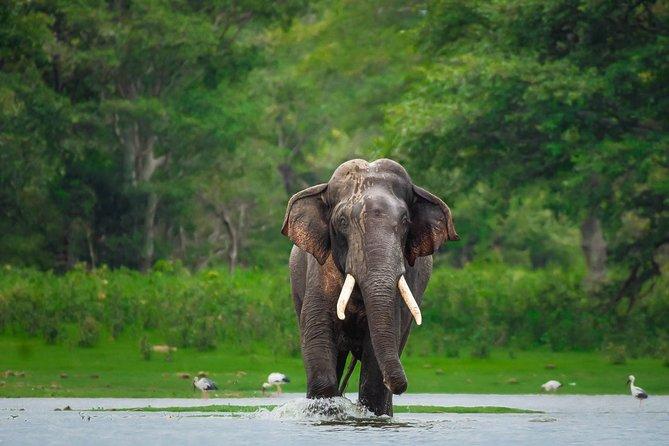 Kalawewa National Park Private Safari
