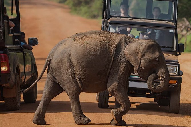 Yala Evening Safari