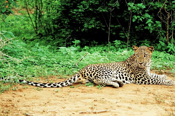 Lunugamvehera National Park Private with Naturalist