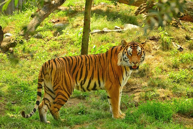 7-Day Mini Group Tour to India Golden Triangle & Ranthambore