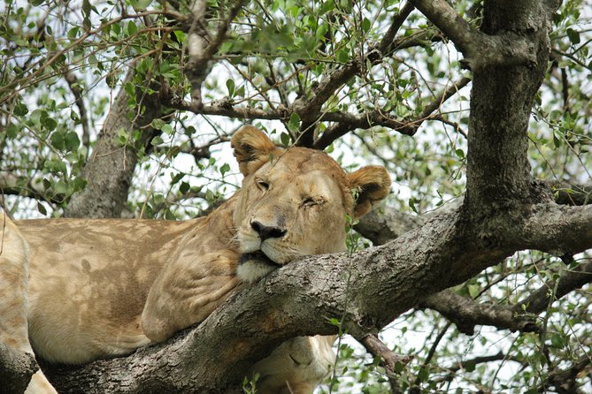 2 Days 1 Night - Safari - Lake Manyara and Ngorongoro
