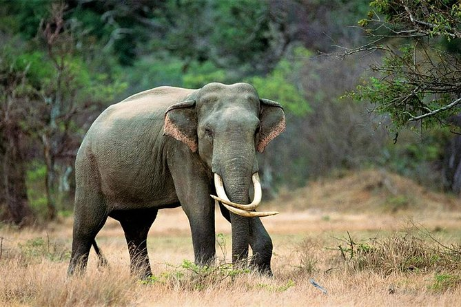 Kalawewa National Park Shared Safari