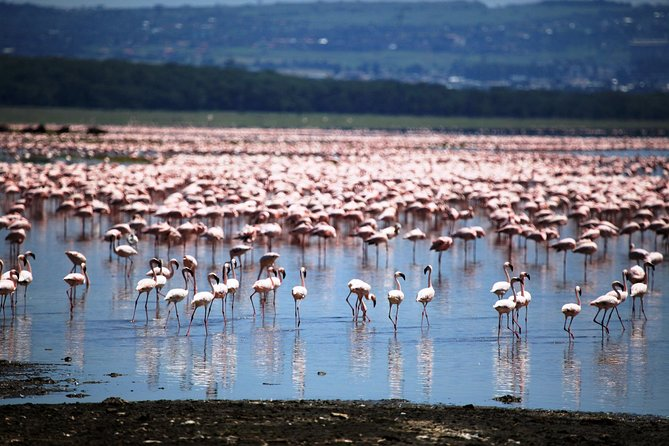4 Days 3 Nights - Safari - Lake Manyara, Serengeti and Ngorongoro