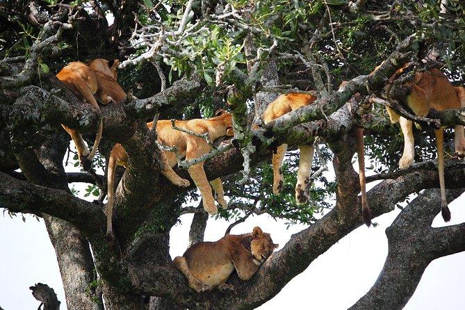 6 Days 5 Nights - Safari - Tarangire, Lake Manyara, Serengeti and Ngorongoro