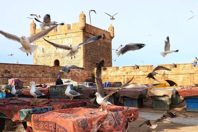 Day trip to Essaouira Mogador and Atlantic Ocean from Marrakech