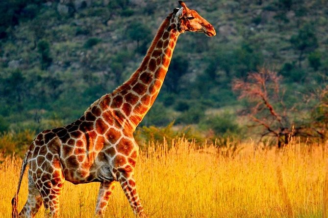 04 Nights 05 Days Safari in Selous Game Reserve: Departure from Zanzibar