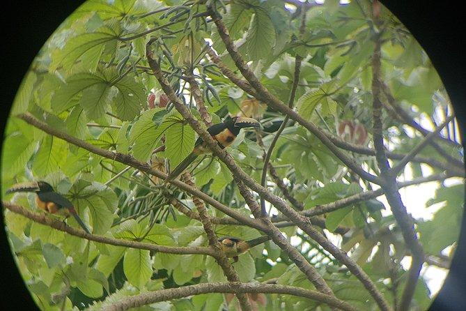 Virtual Birdwatching Tour at the Panama Canal