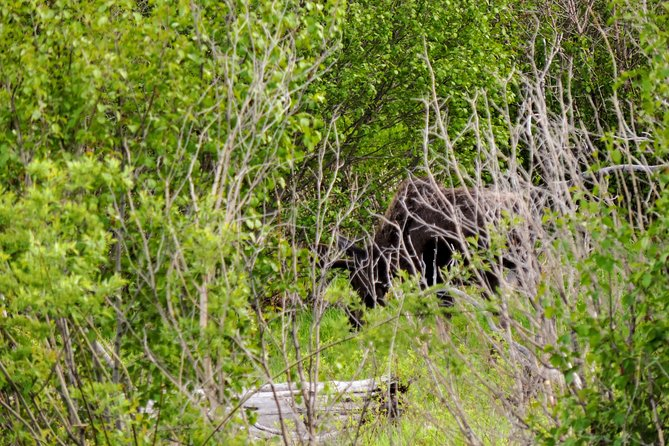 Yellowstone Private Guided Day Hike: Wildlife in Lamar Valley