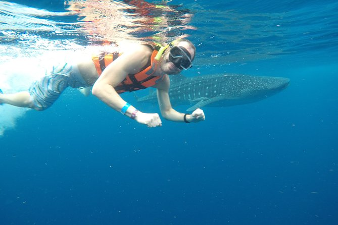 Exciting Swim with Whale Sharks Tour photo 2