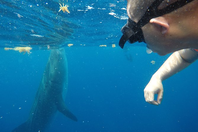 Exciting Swim with Whale Sharks Tour photo 6