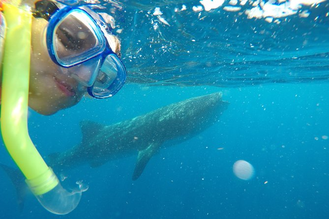 Exciting Swim with Whale Sharks Tour photo 8