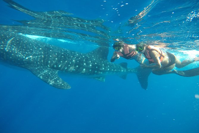 Exciting Swim with Whale Sharks Tour photo 1