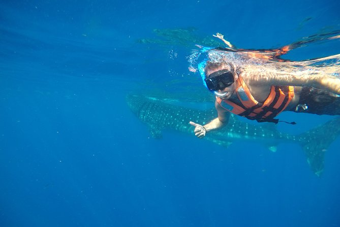 Exciting Swim with Whale Sharks Tour photo 4