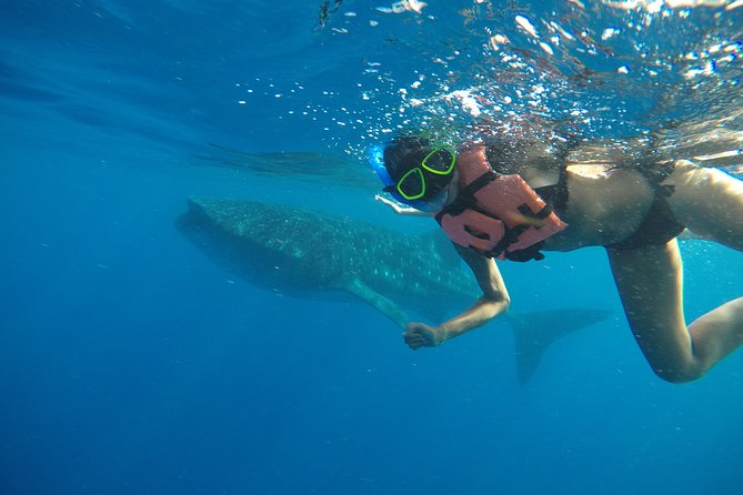 Exciting Swim with Whale Sharks Tour photo 9