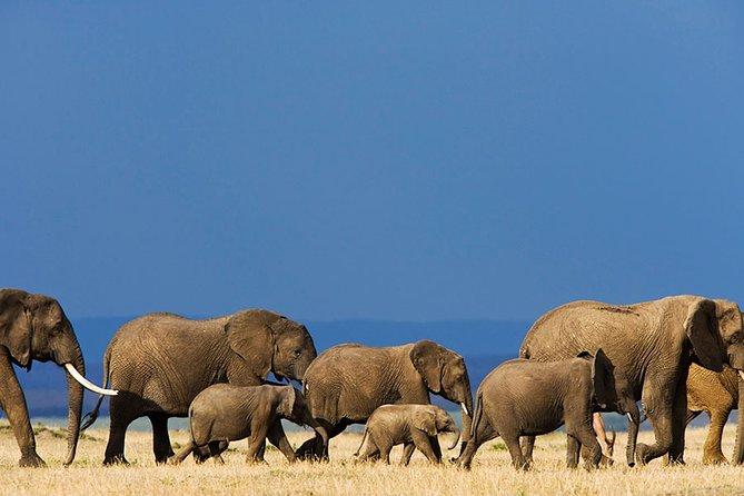6-Day Private Safari of Masai Mara, Lake Nakuru and Amboseli