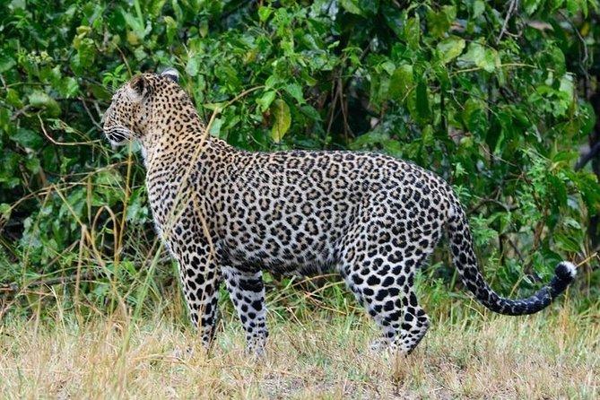 5-Day Private Safari Tour in Olpejeta, Lake Nakuru & Masai Mara with 4x4