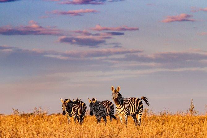 3-Day Private Luxury Safari in Masai Mara National Reserve