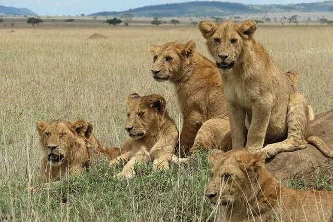 5-Day Mid Range Safari Lake Manyara Serengeti and Ngorongoro