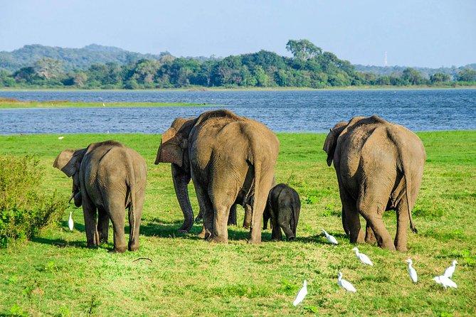 Maduru Oya National Park Shared Safari
