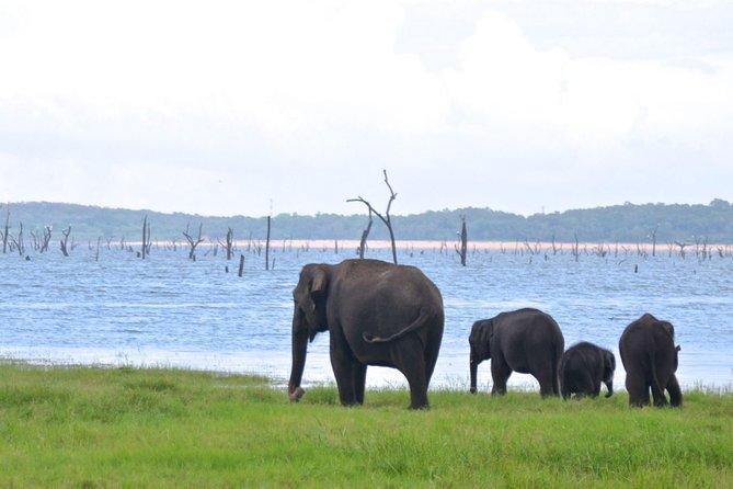 Kaudulla National Park Safari Tour (Half Day)